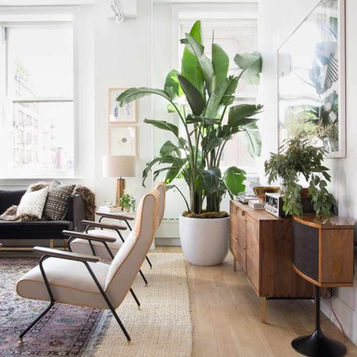 een nieuw interieur kun je simpel creren door de boel eens om te draaien een muur te behangen of je interieur met planten aan te kleden